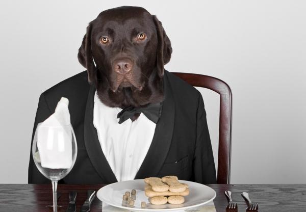 Kutyabarát tippek – Hogyan viselkedjünk kutyánkkal étteremben, kávézóban?