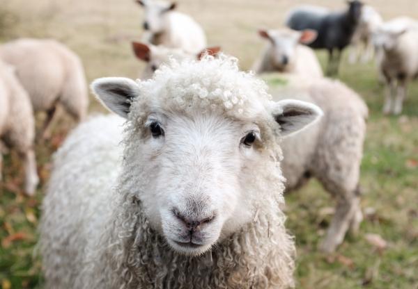 Sajtfesztivál és lampionos majális: vidéki programajánló a hosszú hétvégére