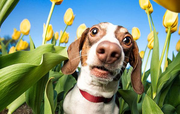 Egész évben kullancsszezon – így védd kutyádat a kullancsok ellen