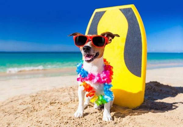 Nyaralás kutyával – a leghasznosabb tippek, ha kutyabarát szálláshelyre indulsz