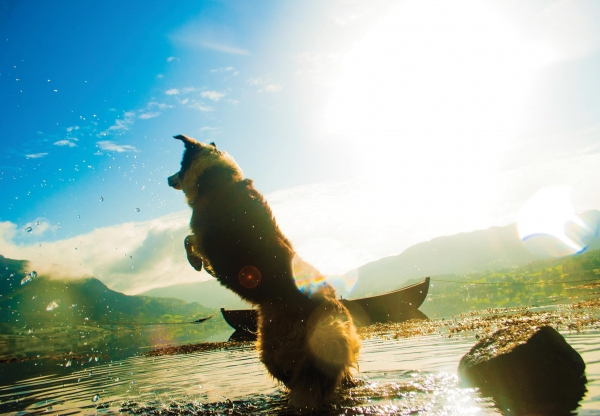 Kutyabarát Balaton – Kutyával strandolnál? Hajrá!
