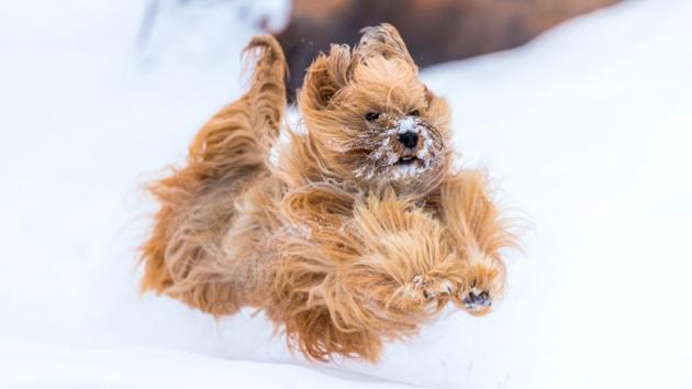 6 Tévhit a télről – kutyaszemmel
