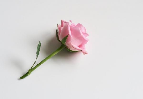 Rózsás hangulatodban vagy?