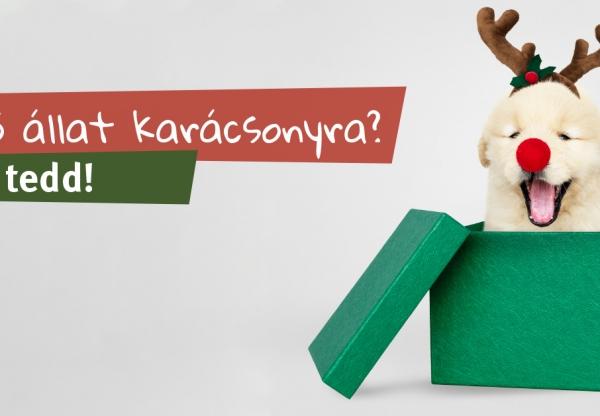 Élő állat karácsonyra?  Ne tedd!