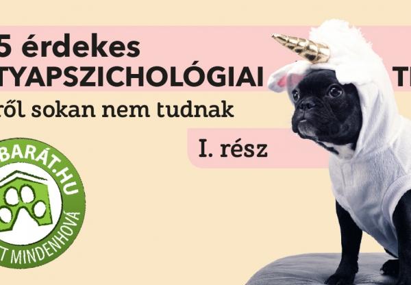 5+5 érdekes  kutyapszichológiai tény, amiről sokan nem tudnak – 1. rész