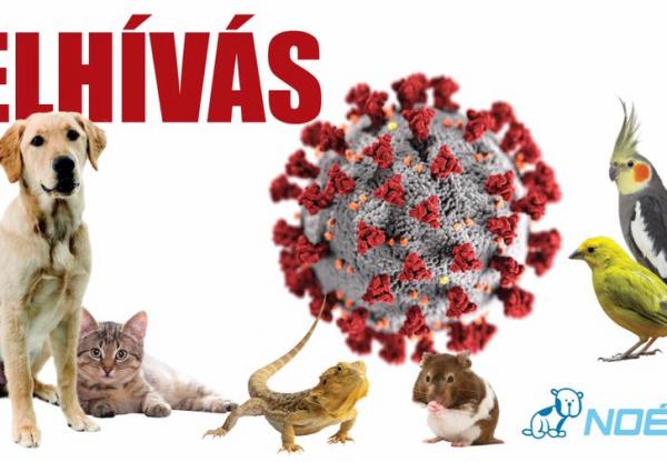 Fontos felhívás a járvánnyal kapcsolatban állattartóknak!