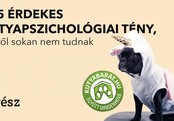 Kutyabarát – 5+5 érdekes  kutyapszichológiai tény, amiről sokan nem tudnak 1. rész