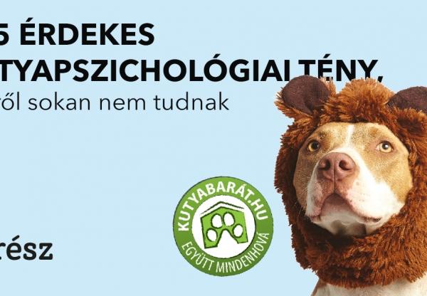 Kutyabarát – 5+5 érdekes  kutyapszichológiai tény, amiről sokan nem tudnak 2. rész