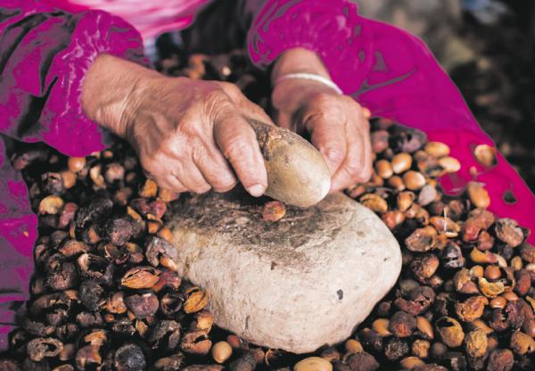 A marokkói folyékony arany nyomában – az argánolaj tölrténete