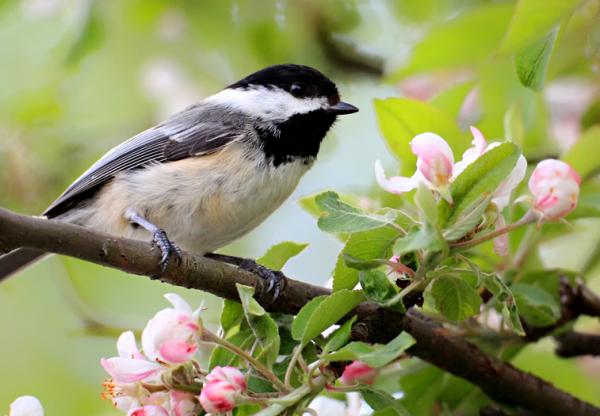 Mobilra szállt az Év madara 100%-ban környezetbarát mobiltok