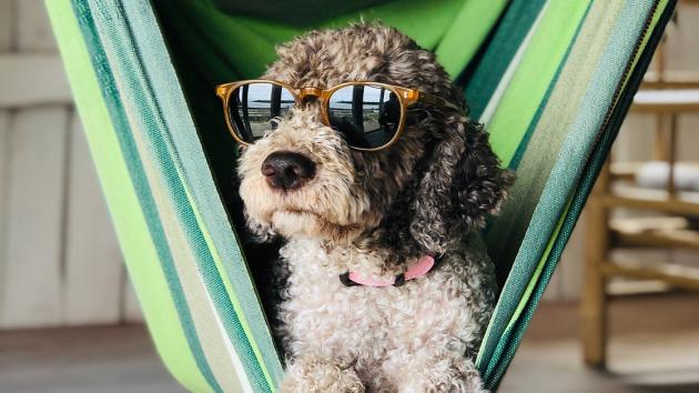 A kutyáknál is fontos a fényvédelem