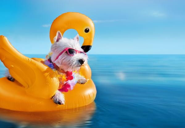 Strandolj és piknikezz kutyával a Balatonon!