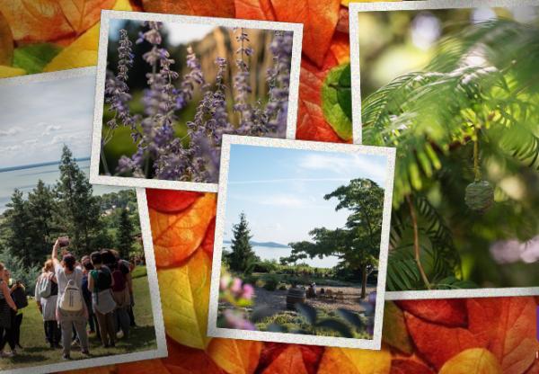 Fotópályázat – Follyban járt az ősz
